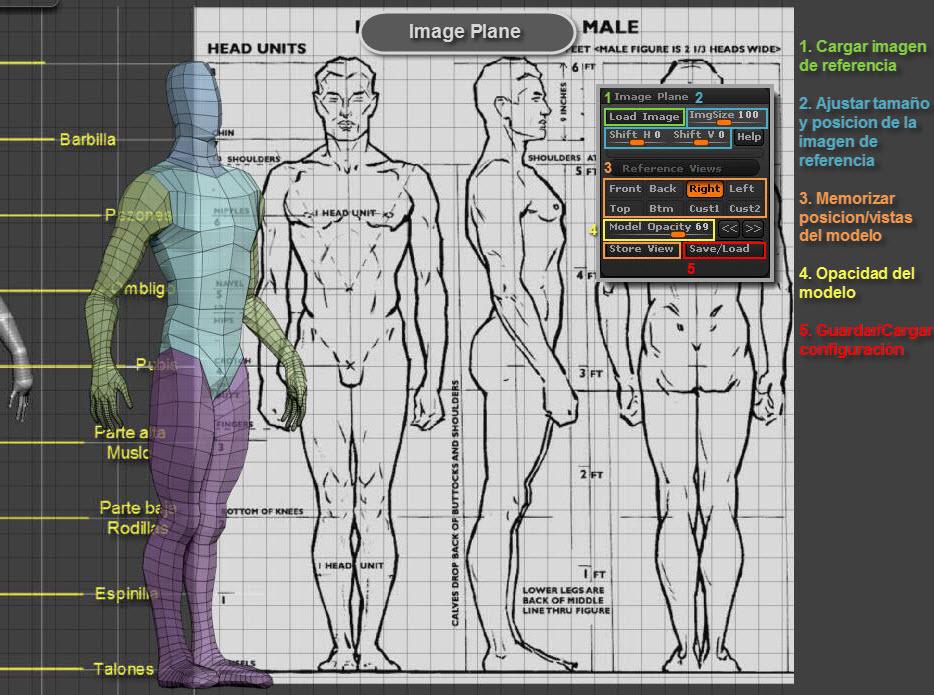 anatomia   doqpelganger